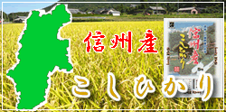 信州産コシヒカリ